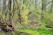 лес / Россия