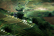 склон / Вьетнам