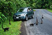 на дороге / Коста-Рика