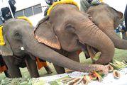 слоны-девочки / Таиланд