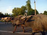 Ходят по дорогам / Азербайджан