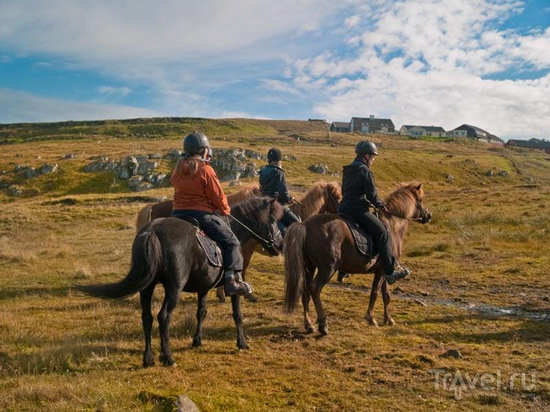 Прогулка на лошадях недалеко от Торсхавна / Фото с Фарерских островов