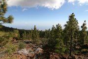 Горно-лесной массив / Испания