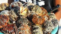 Sea Urchin / Филиппины