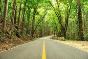 Восстановленные джунгли / Филиппины