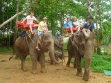 Катание на слонах / Таиланд