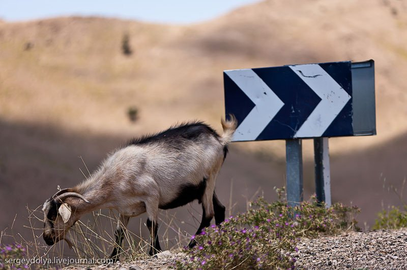 Фауна Марокко / Фото из Марокко