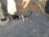 Кошки в отеле / Испания