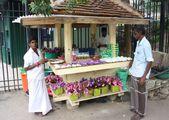Могут и попозировать / Шри-Ланка