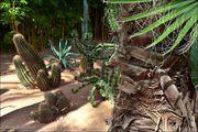 Мечта коллекционера растений / Марокко