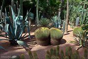 Кактусы и пальмы / Марокко