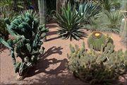 Сотни видов растений / Марокко