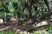 Много видов пальм / Марокко
