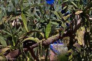 Коллекция растений / Марокко