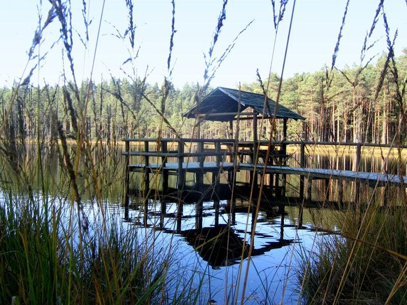Лесное озеро, усадьба Жилену, Литва / Фото из Литвы