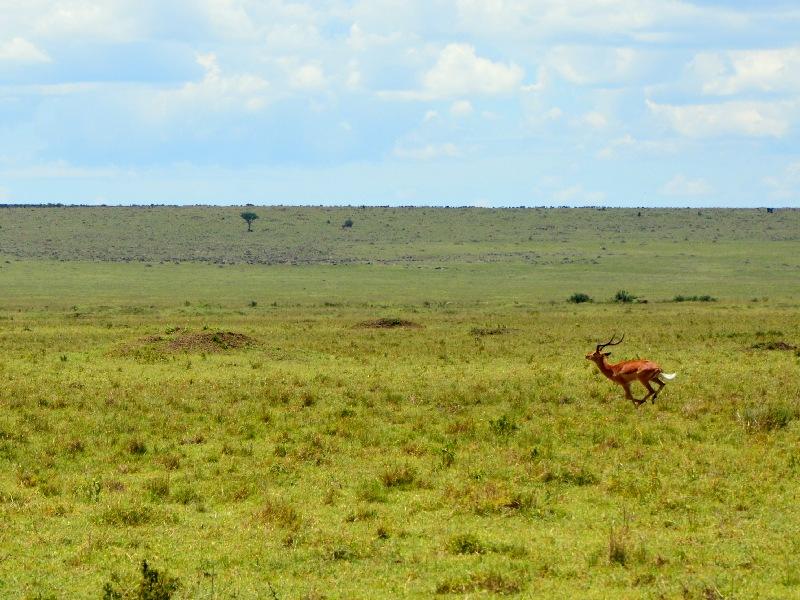 Национальный парк Масаи-Мара, Кения / Фото из Кении