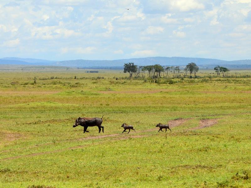Обитатели национального парка Масаи-Мара, Кения / Фото из Кении