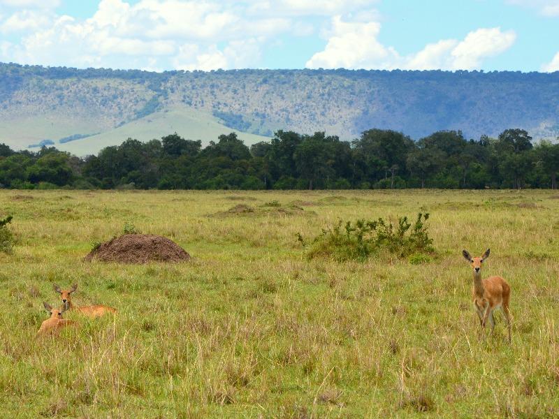 Пейзаж национального парка, Кения / Фото из Кении