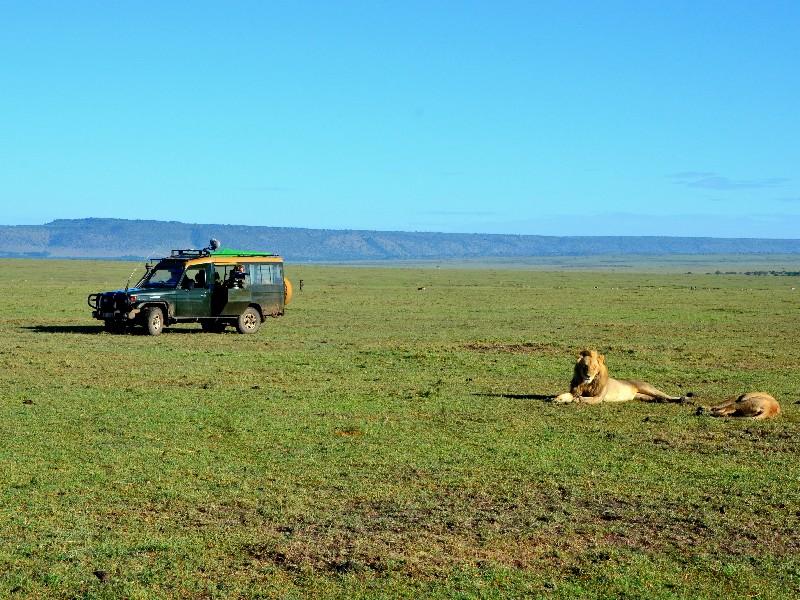Львы и туристы в национальном парке Масаи-Мара, Кения / Фото из Кении