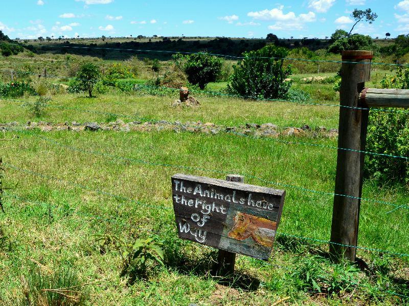 Ограда кемпинга в Кении / Фото из Кении
