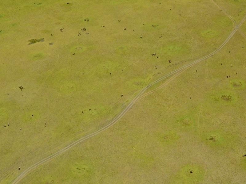 """""""Бездорожье"""" национального парка Масаи-Мара, Кения / Фото из Кении"""
