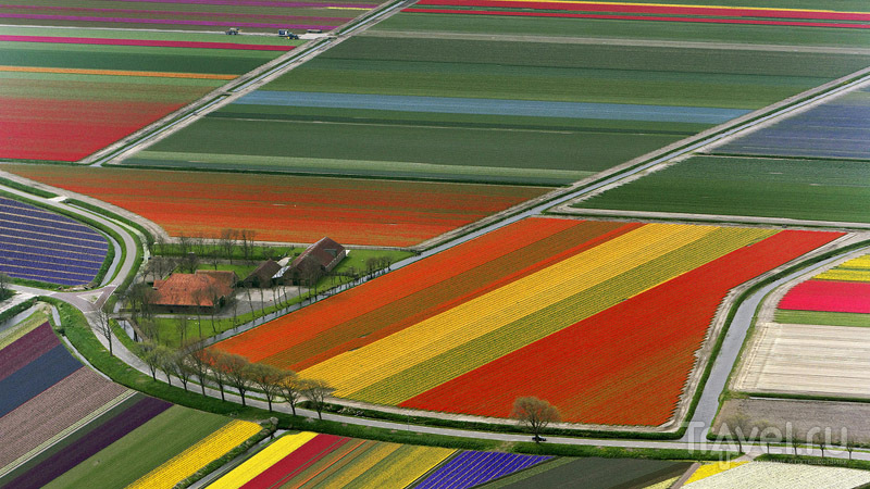 Разноцветные поля Голландии / Нидерланды