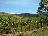 Ограда дороги / Коста-Рика