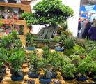 Маленькие деревья / Италия