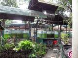 Аквариумы и рыбки / Филиппины