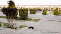Местный кот / Иран