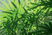 Пальмовая ветвь / Таиланд
