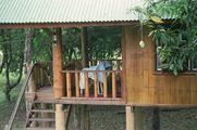 Дом под магновым деревом / Таиланд