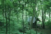 Домик монаха в лесу / Таиланд