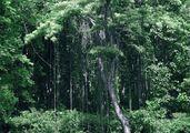 Тропический лес / Таиланд
