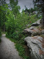 Настоящий лес / Норвегия