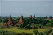 В зарослях / Мьянма