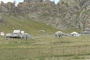 Парк динозавров / Монголия