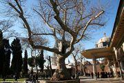Красивые деревья / Турция