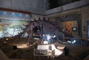 Скелеты динозавров / Южная Корея