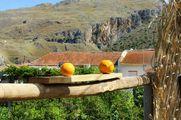Свежие апельсины / Греция