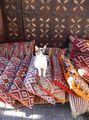Житель рынка / Марокко