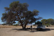 Дерево №24 / Намибия