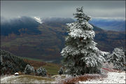 Снег на ветках / Грузия
