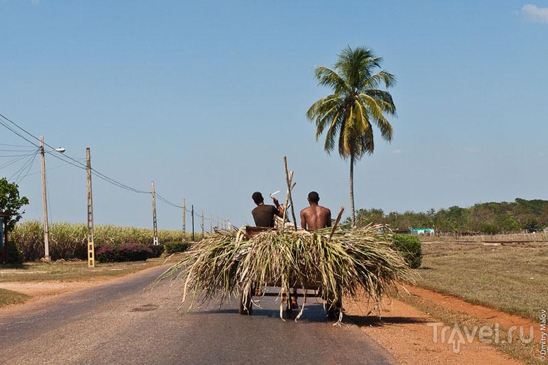 Гужевой транспорт на Кубе / Фото с Кубы