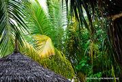 Тропическая растительность / Мальдивы