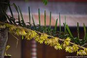 Украшенный бамбуковый шест / Индонезия