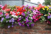 Балконные цветы / Великобритания