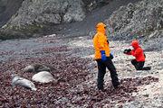 Антарктические туристы / Антарктика