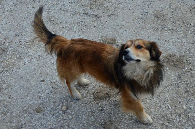 Собака из Сербии / Фото из Сербии
