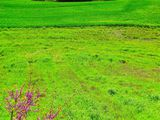 Изумрудные поля / Греция